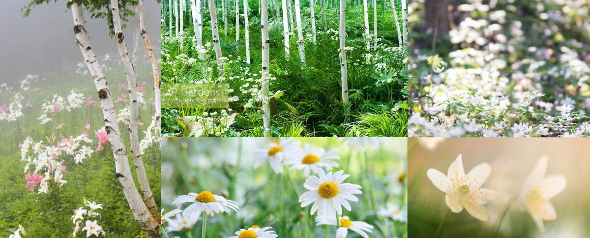 Joannas-GardenService