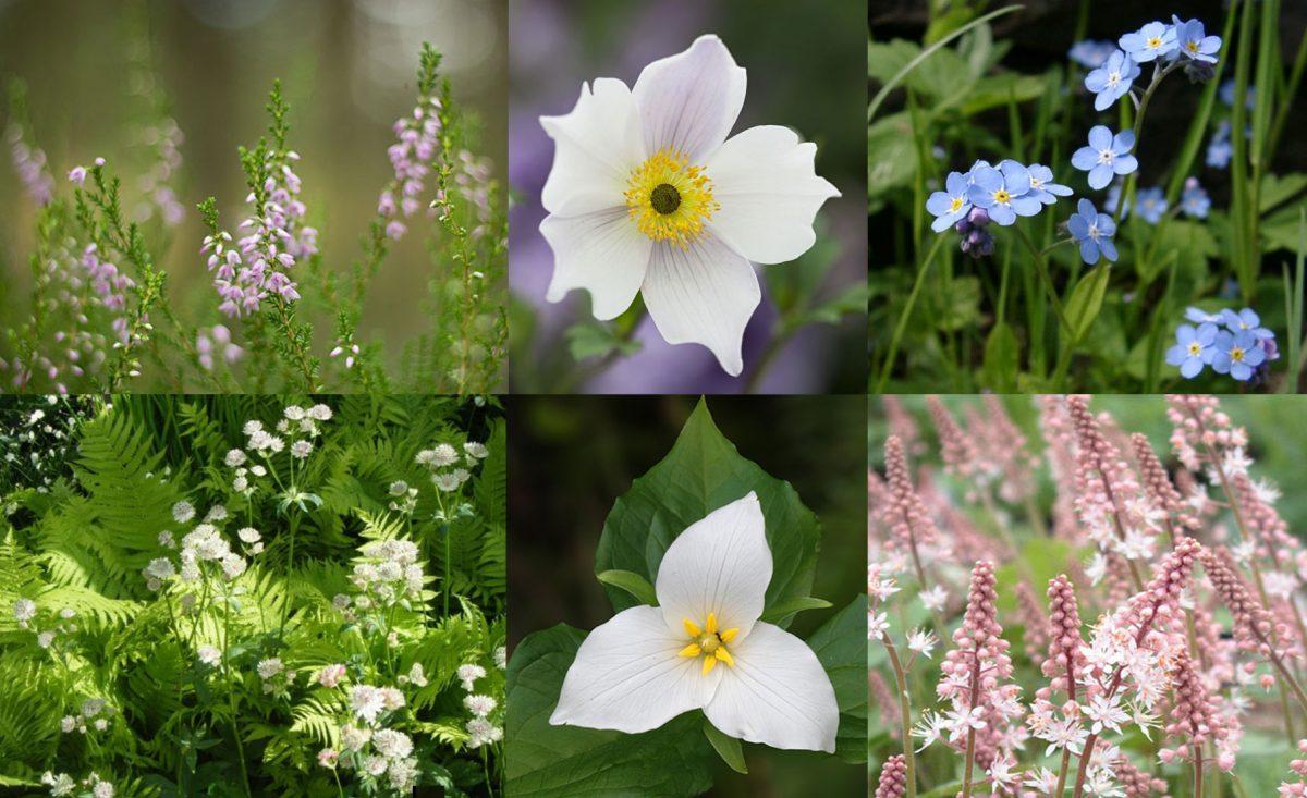 Joannas-gardendesign