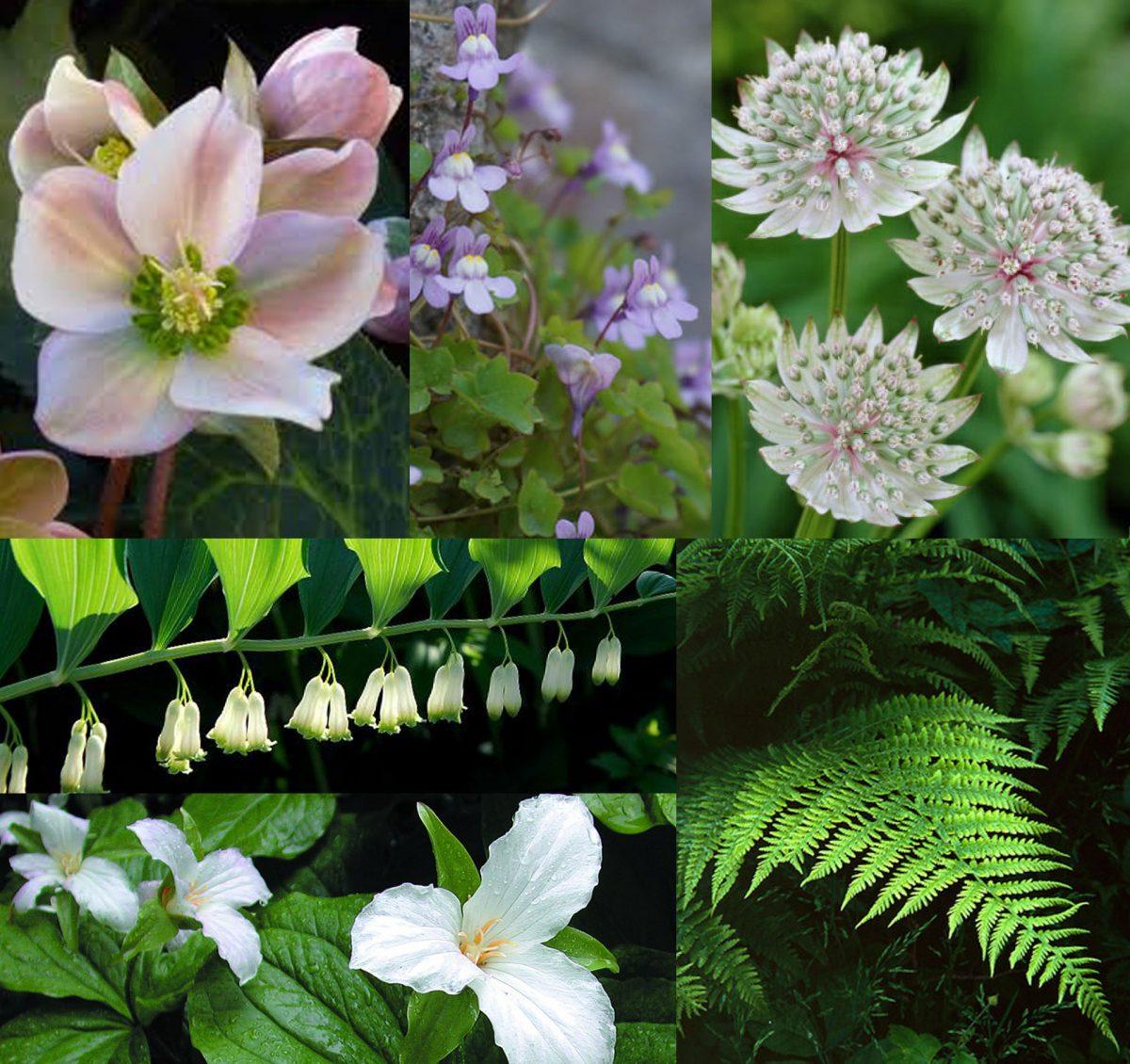 Joannas-gardendesign2
